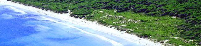 Janer Bus - Playa de Muro